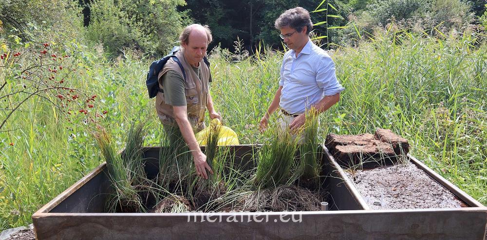 Über 500 fleischfressende Pflanzen in Trauttmansdorff ...